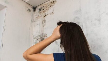 Почему появляется плесень на стенах и как с ней бороться