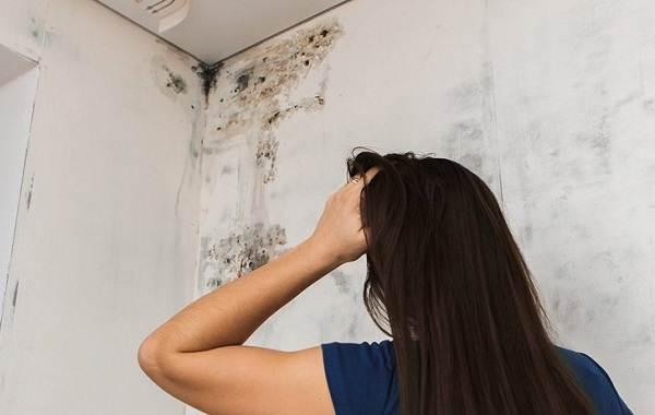 Почему-появляется-плесень-на-стенах-и-как-с-ней-бороться